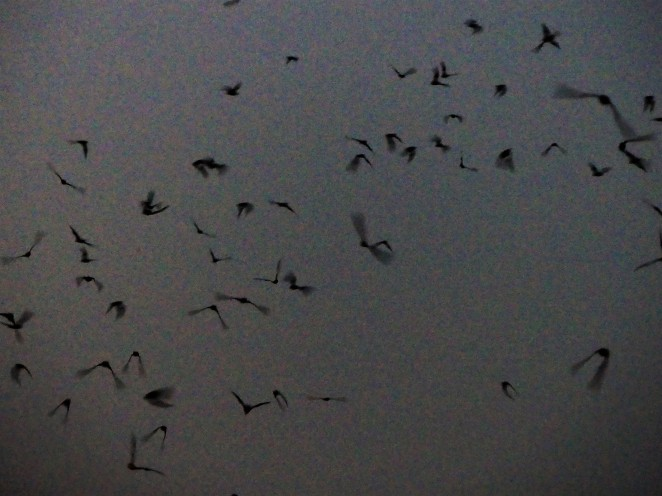 bat sky.jpg