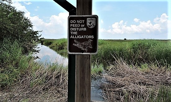 no feeding gators (2).jpg
