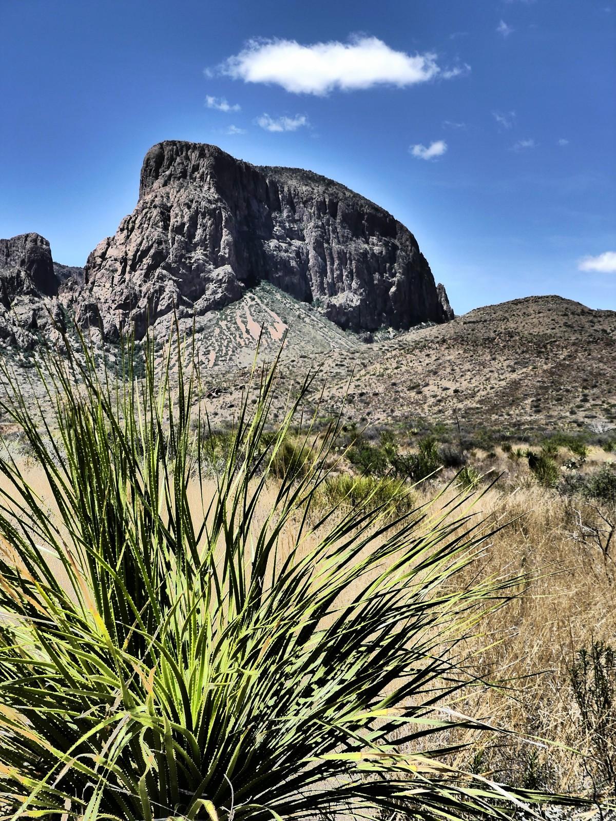 peak with cactus