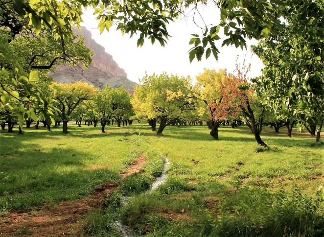 Capitol Reef orchard (2)