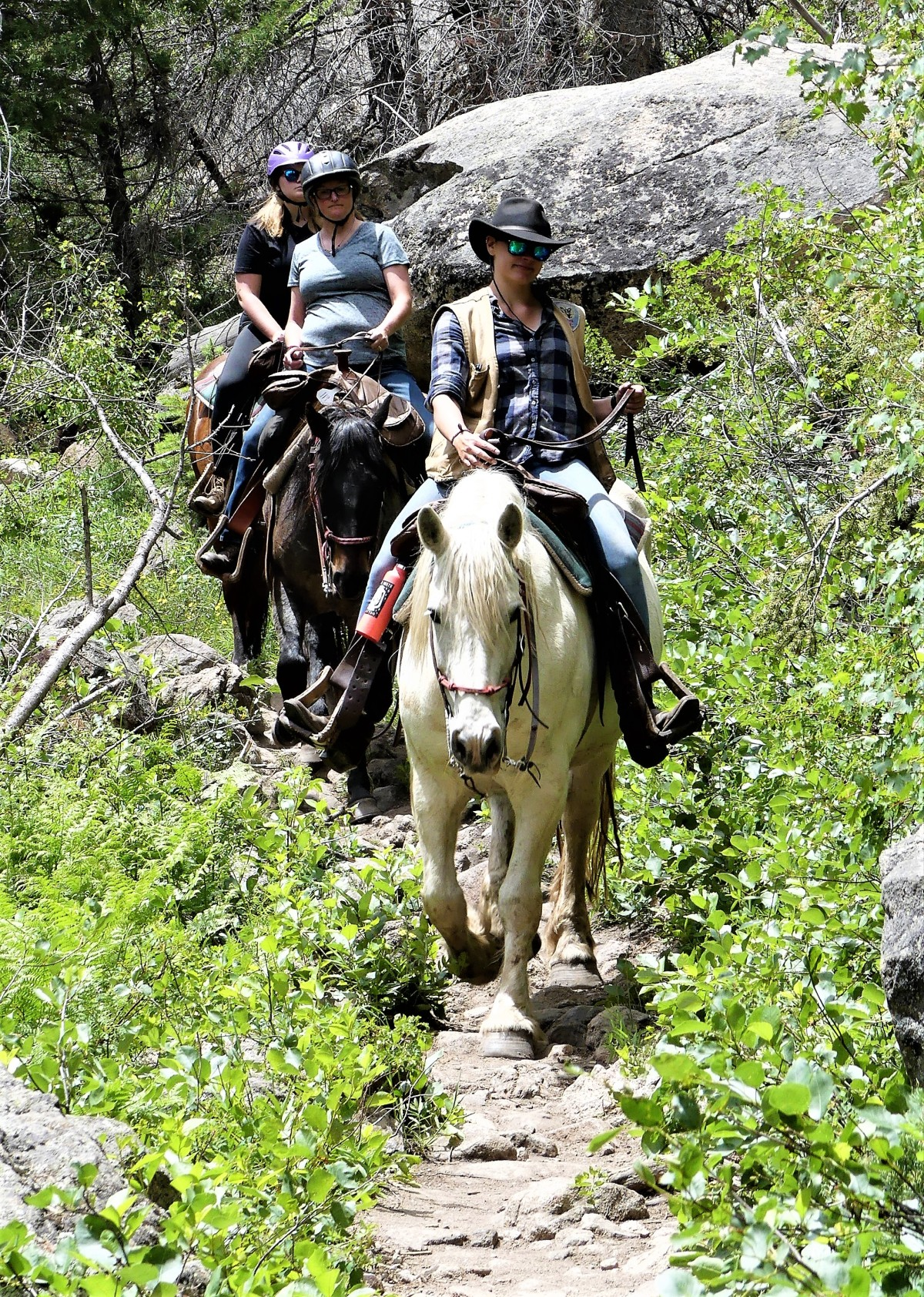 trail horses cub lake