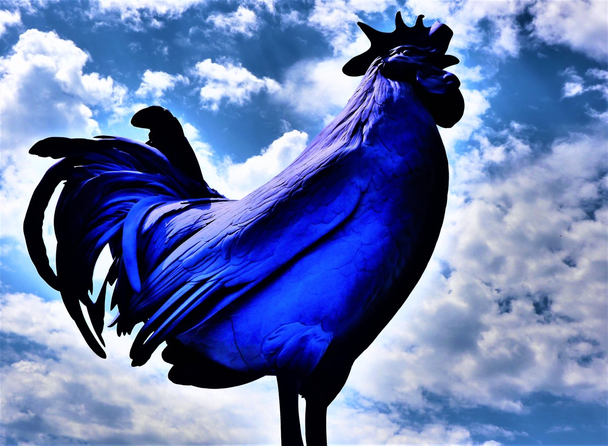 Blue Rooster
