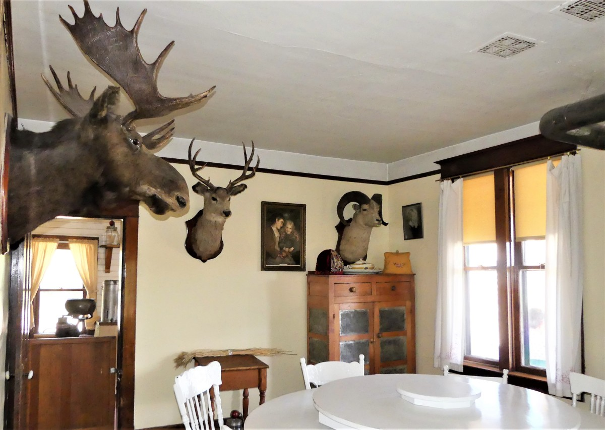 moose dining