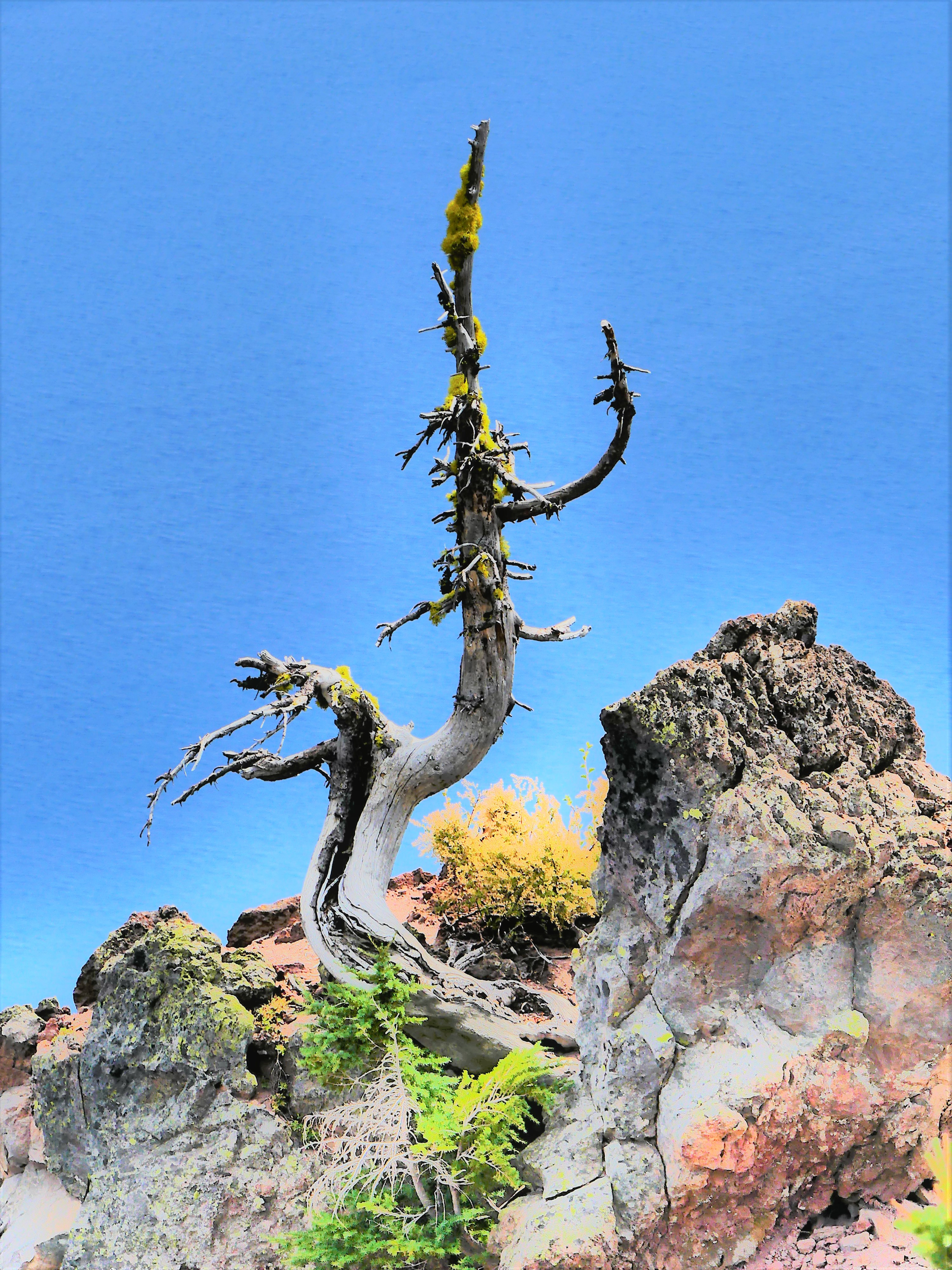 a tree with an idea1
