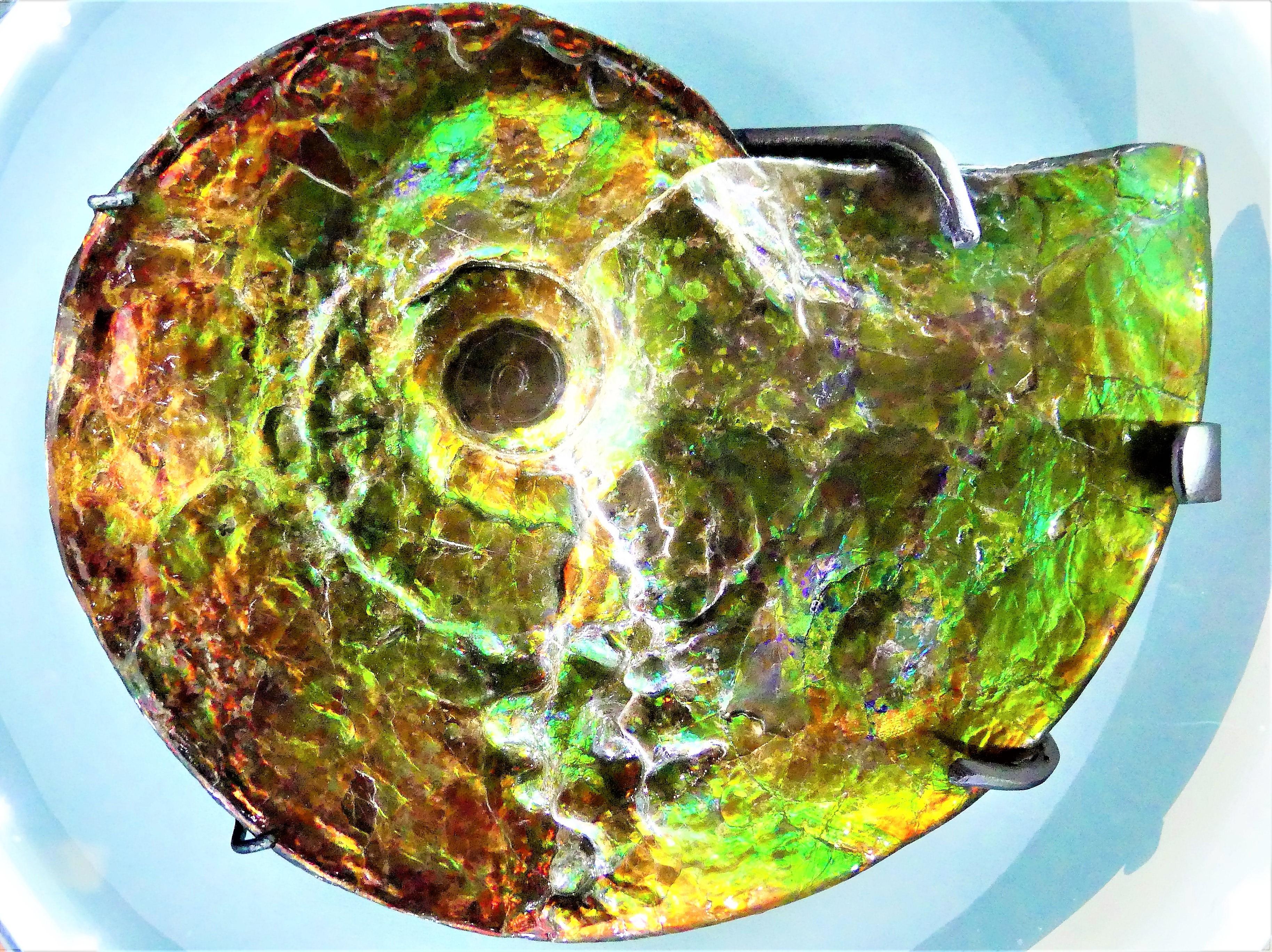 ammonite (2)