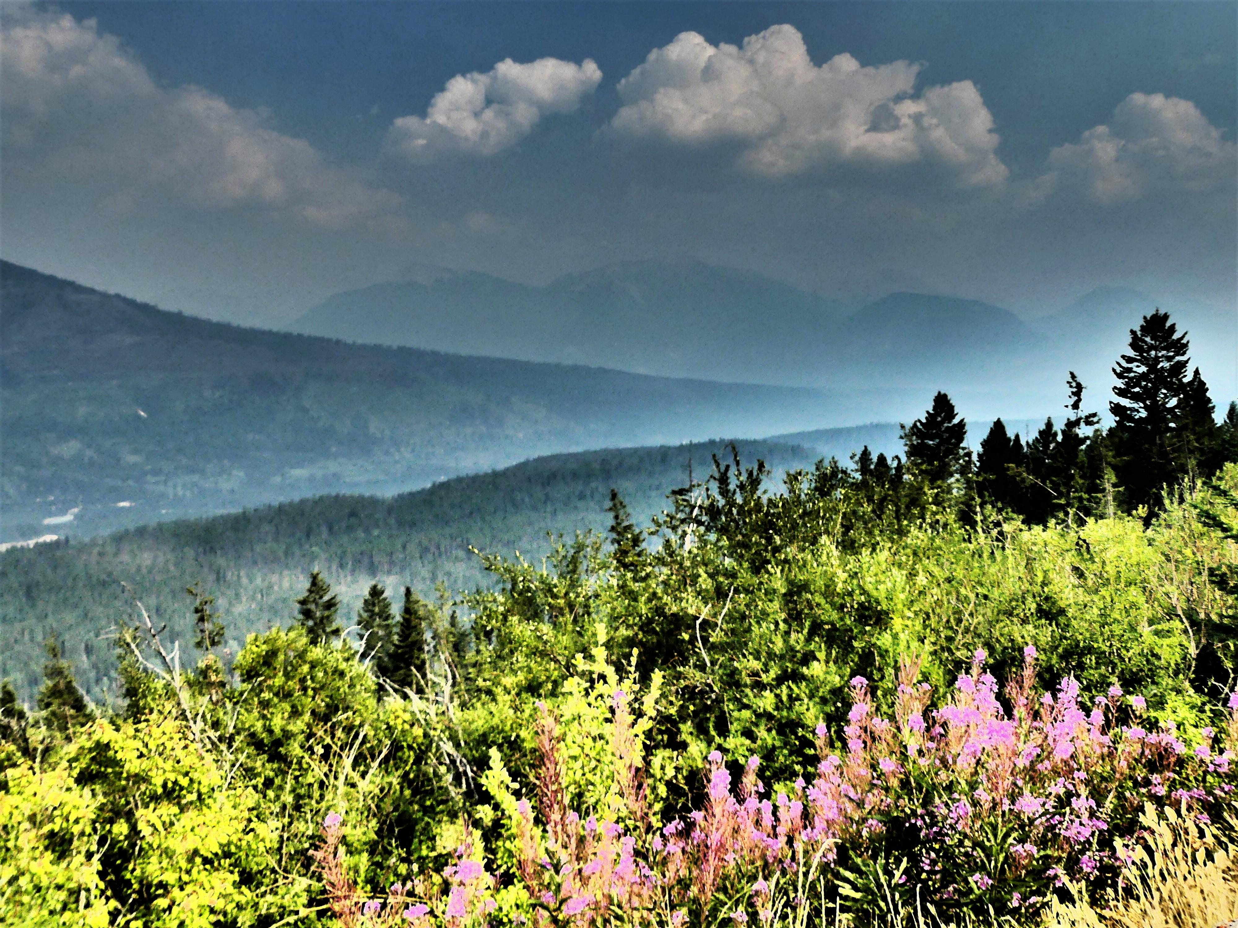 beauty thru the haze