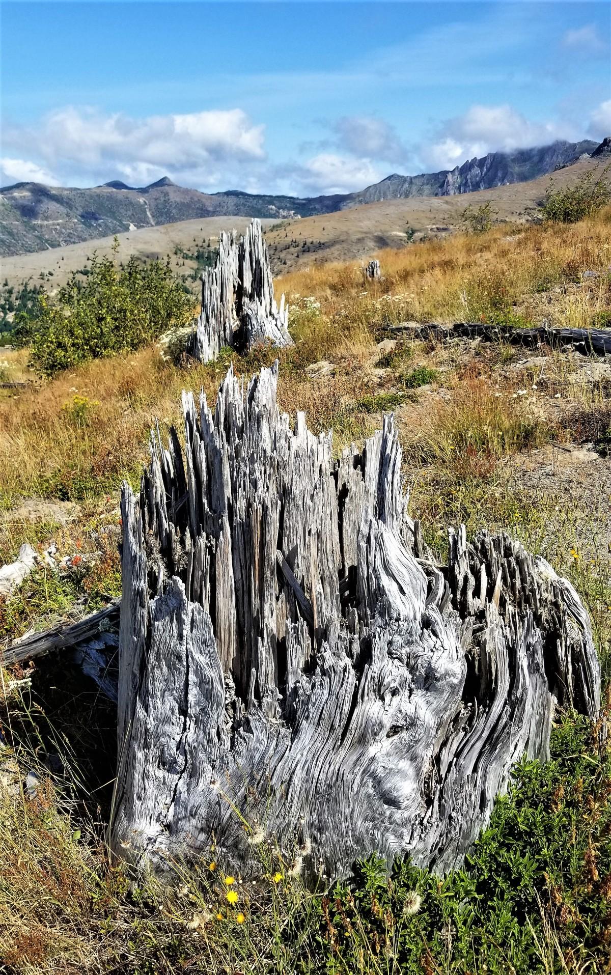 crispy trees