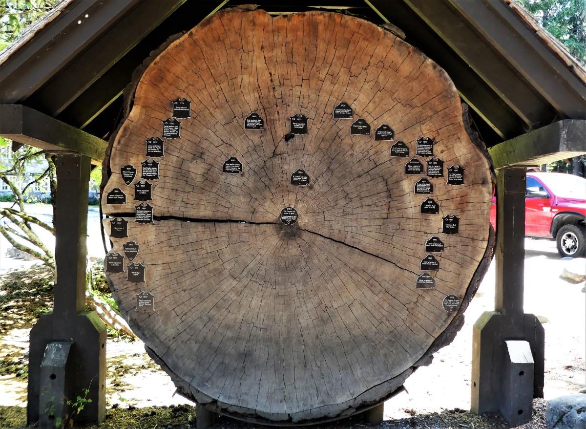 history tree