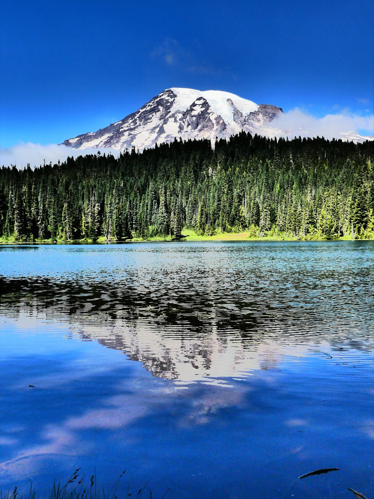 Ranier reflection