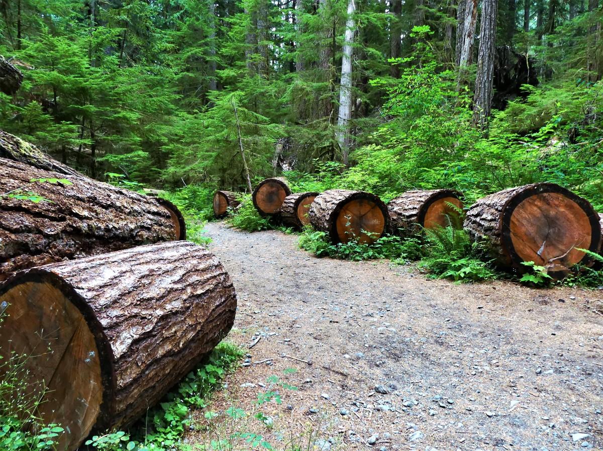 Stairhouse cedar logs