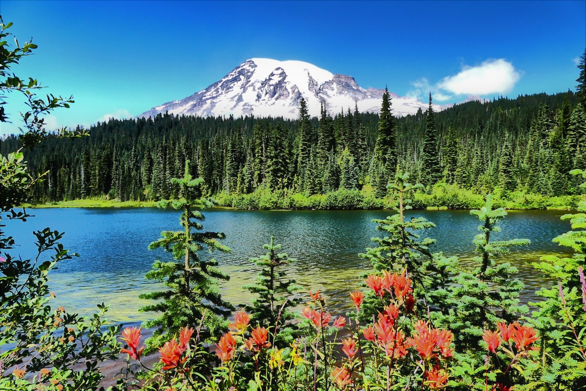 wildflowers and Ranier (2)