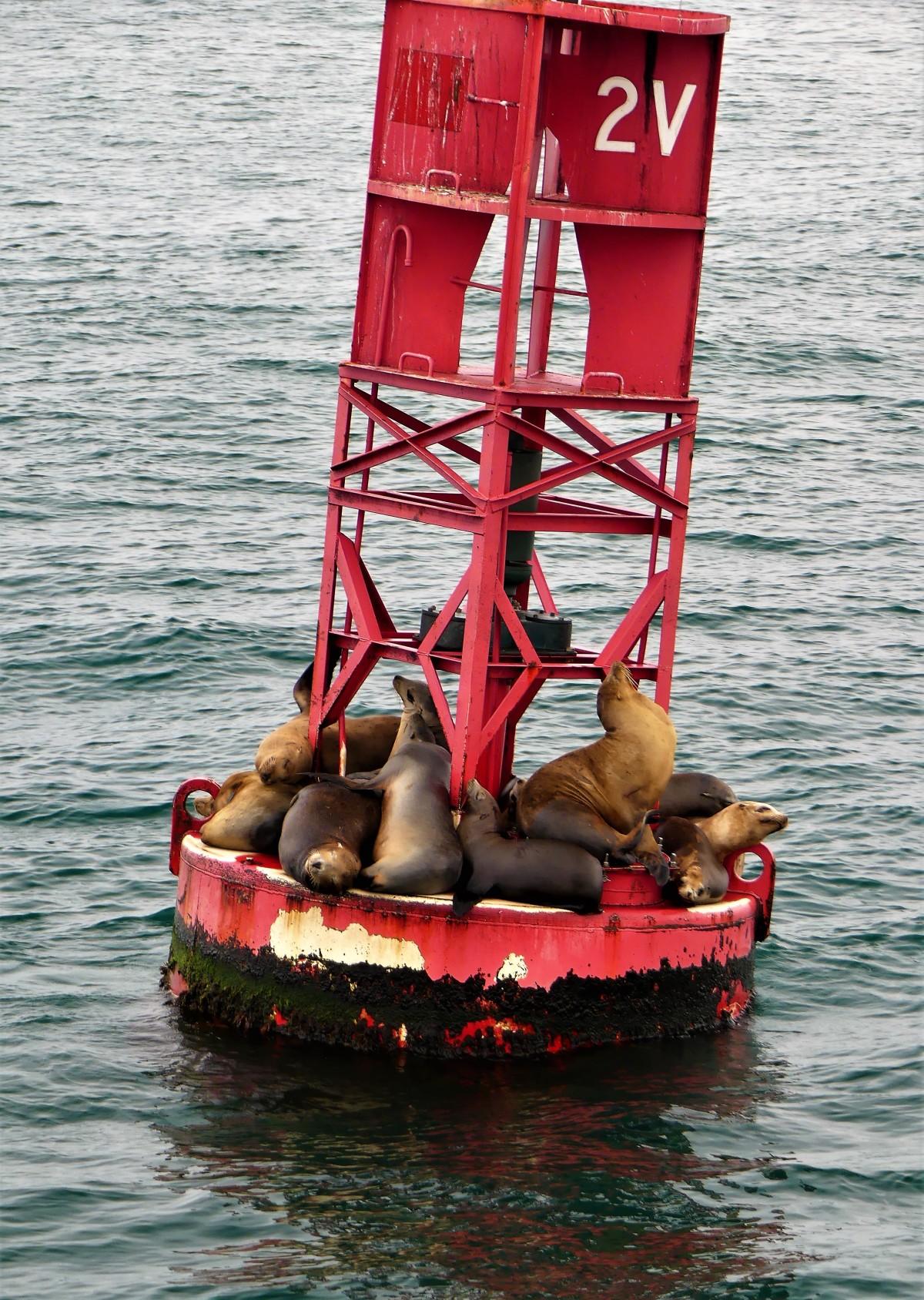 hauling on a buoy