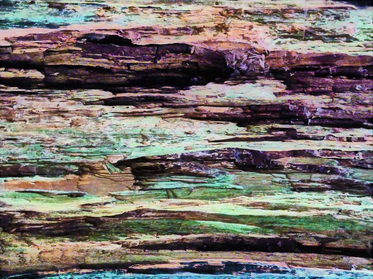 rotting bark