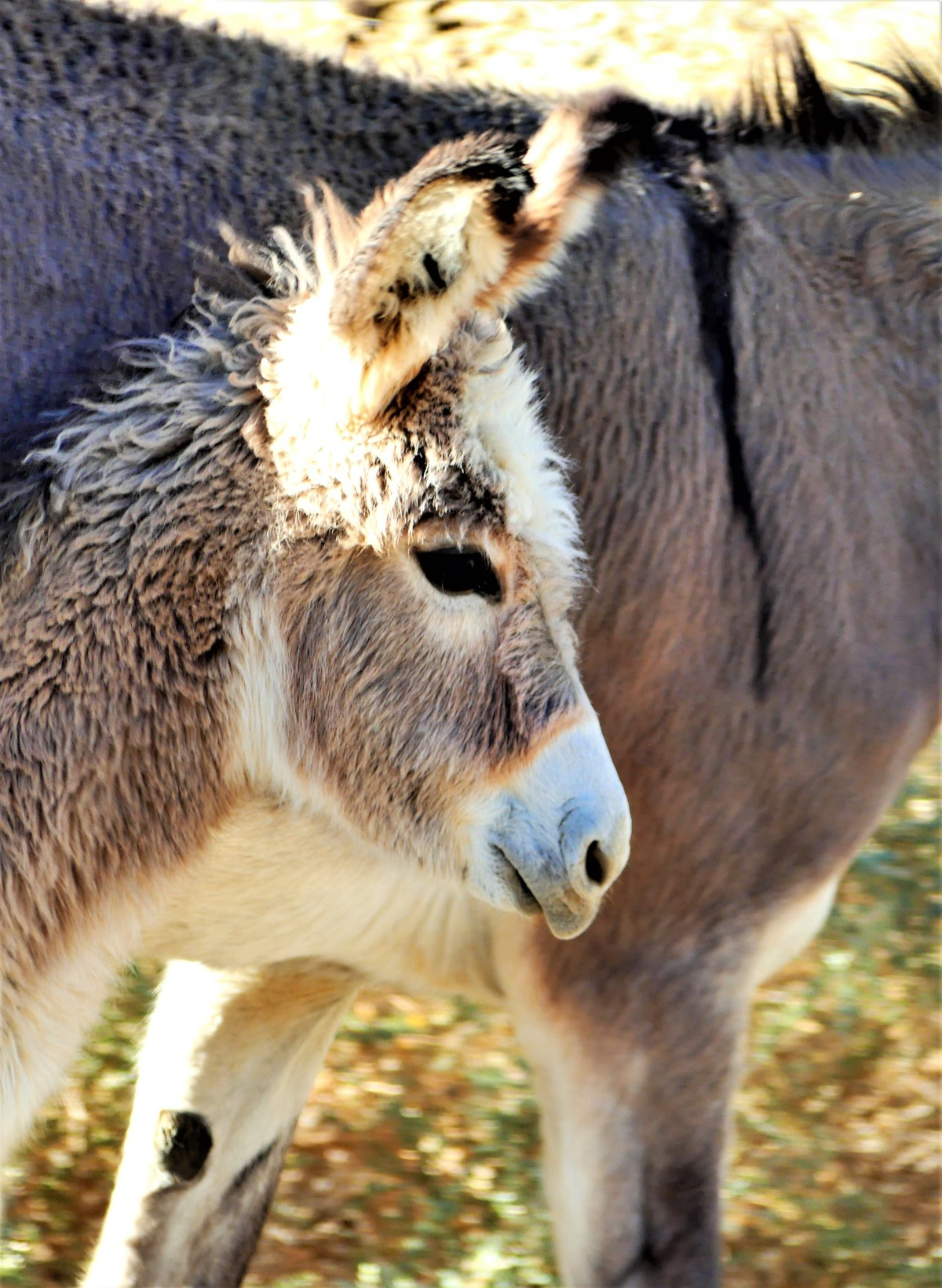 baby mule.jpg