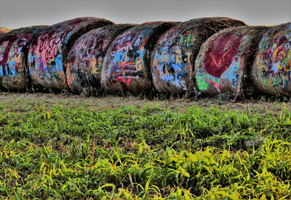 hayrolls.jpg