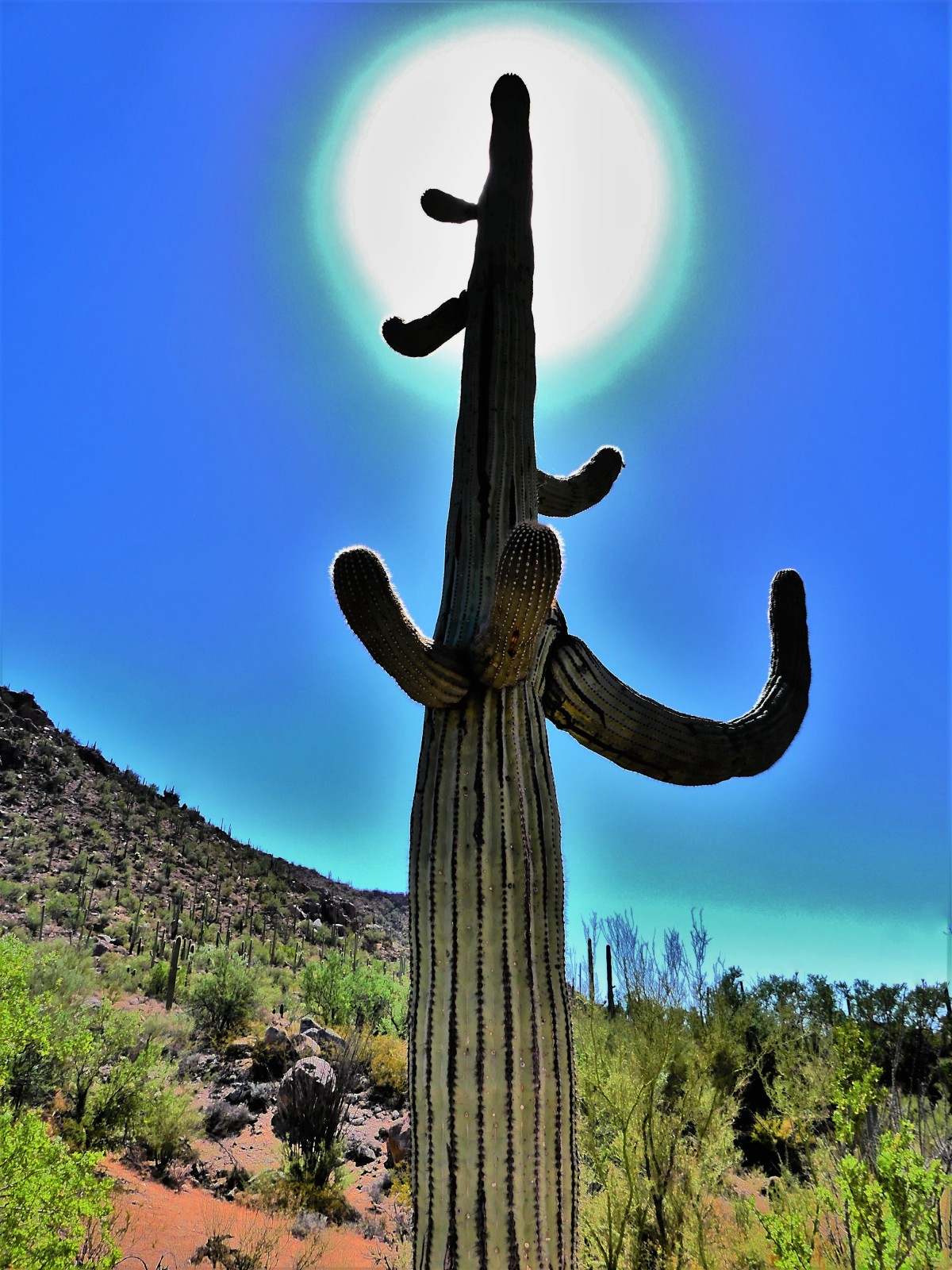 key light saguaro (2)