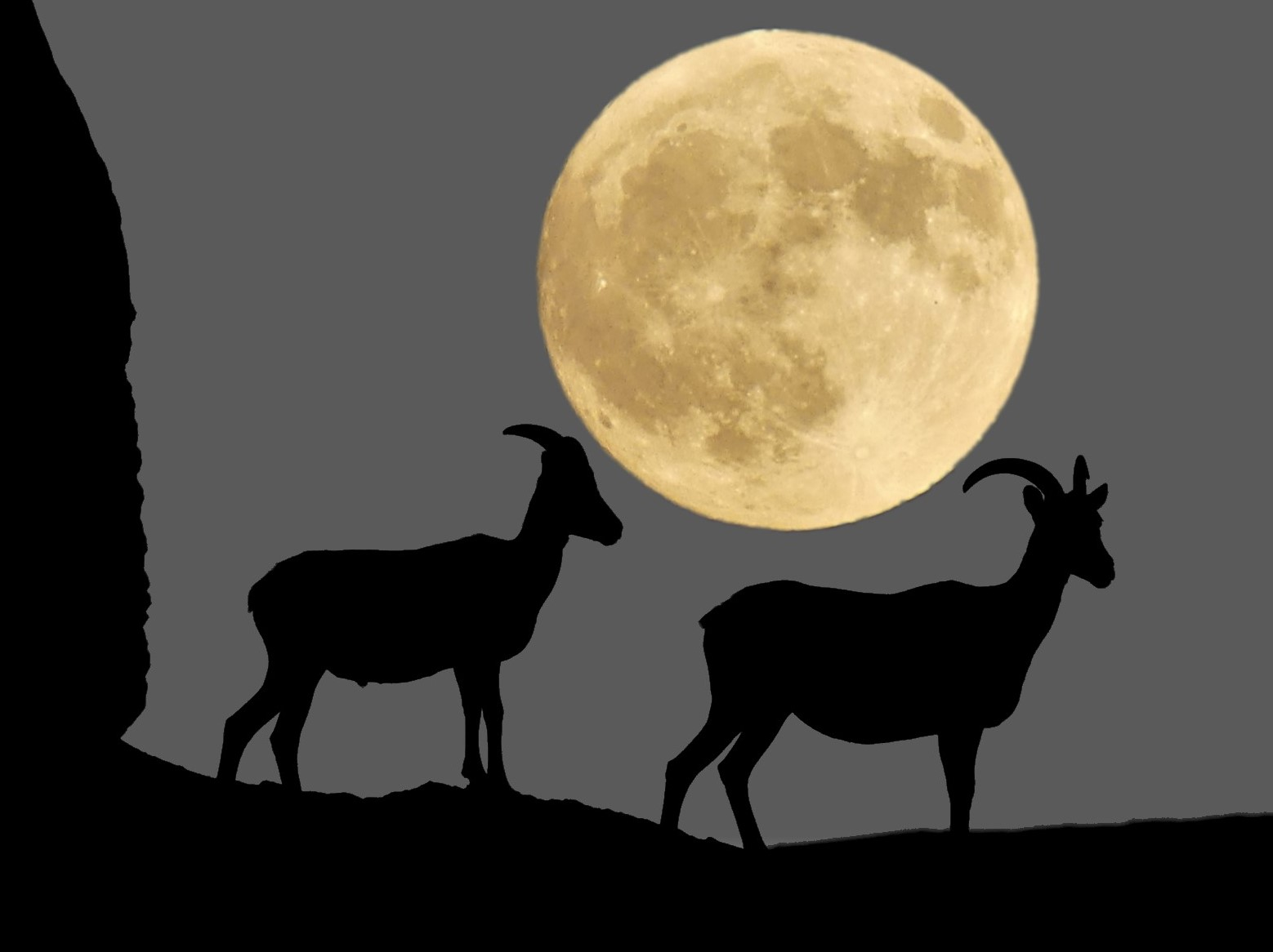 sheep and moon (4)