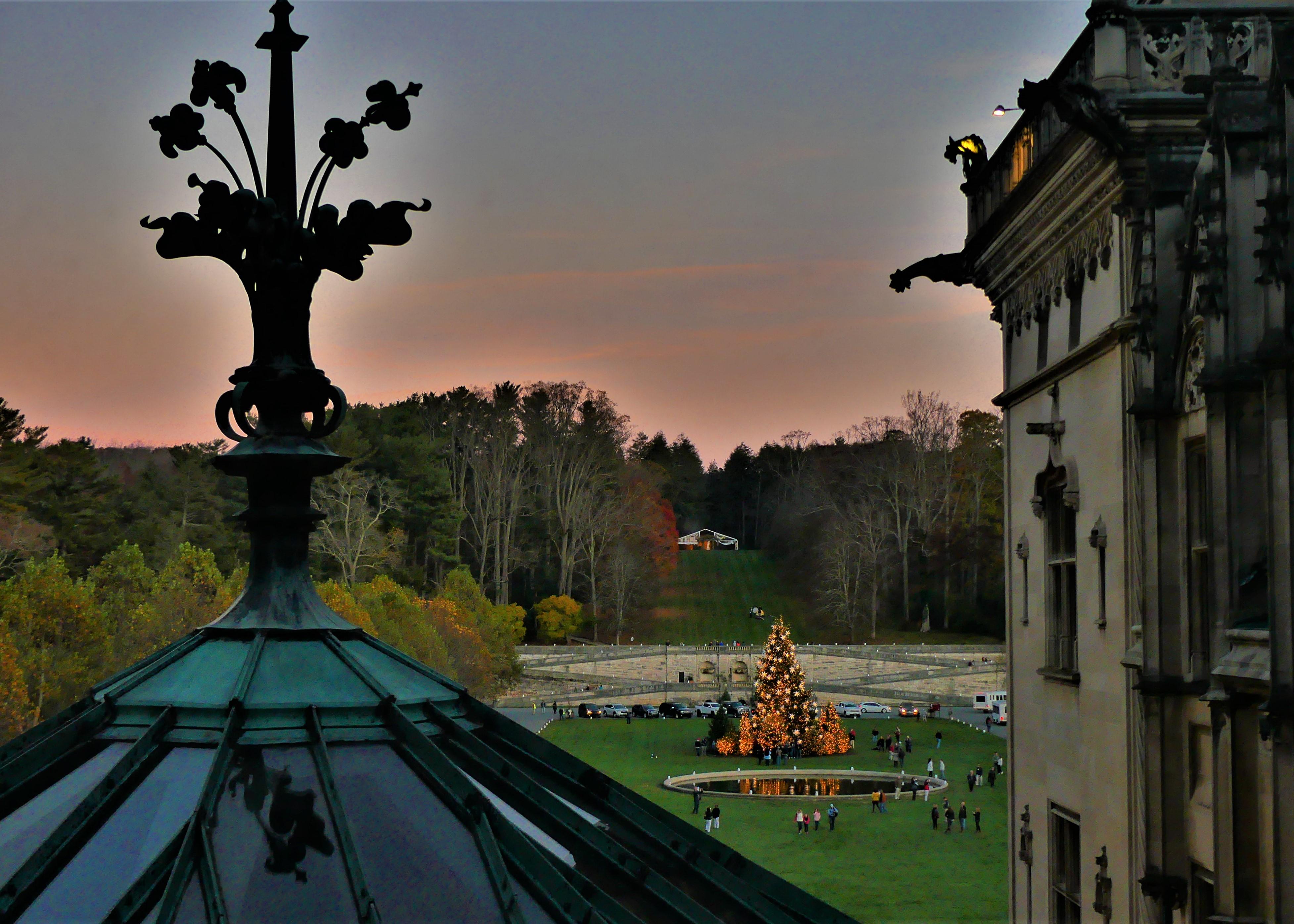 twilight and tree