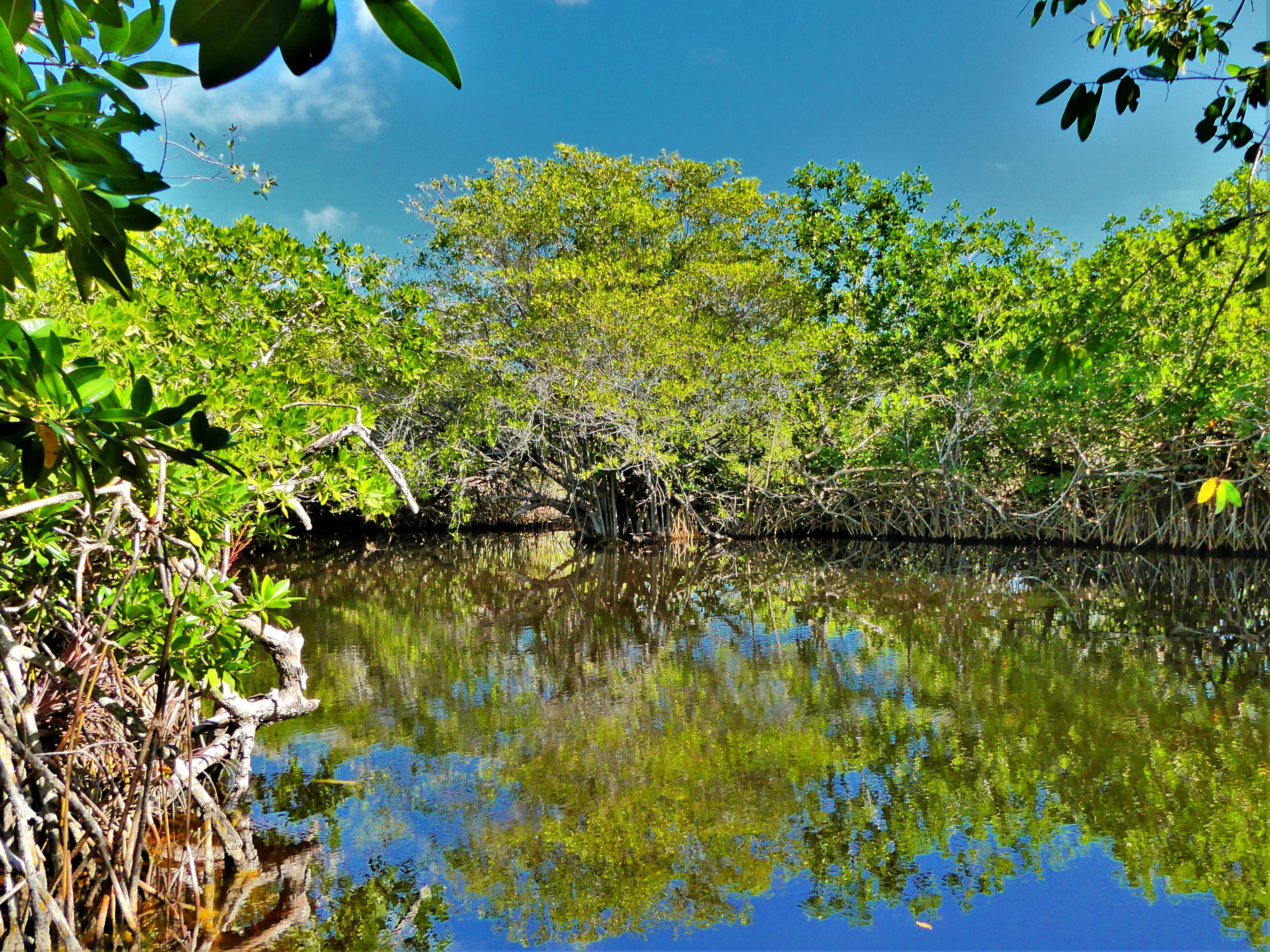 cenote Hondo.jpg
