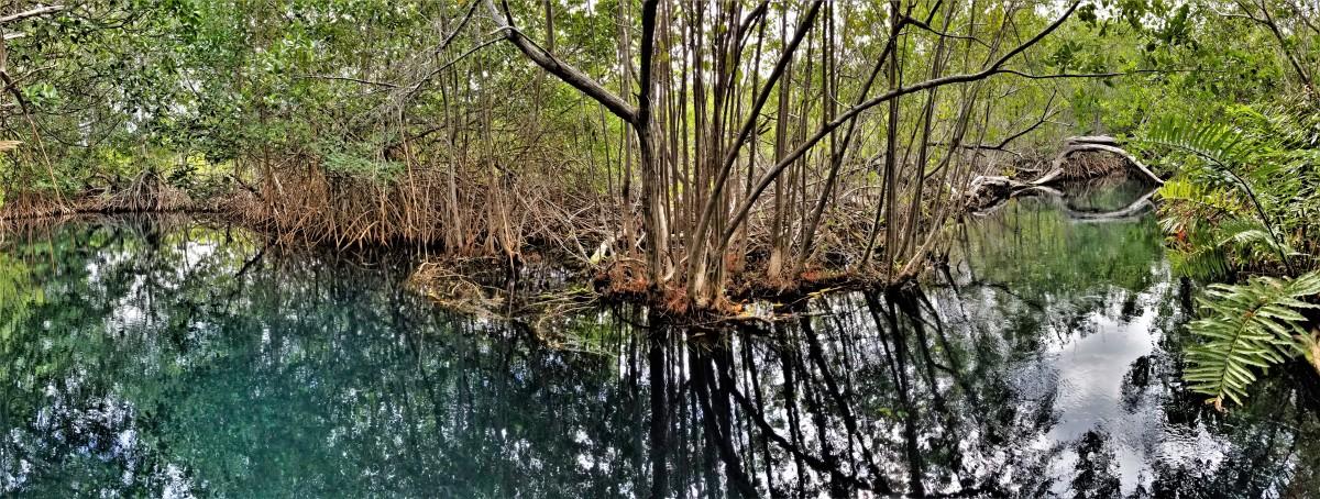 cenote river.jpg
