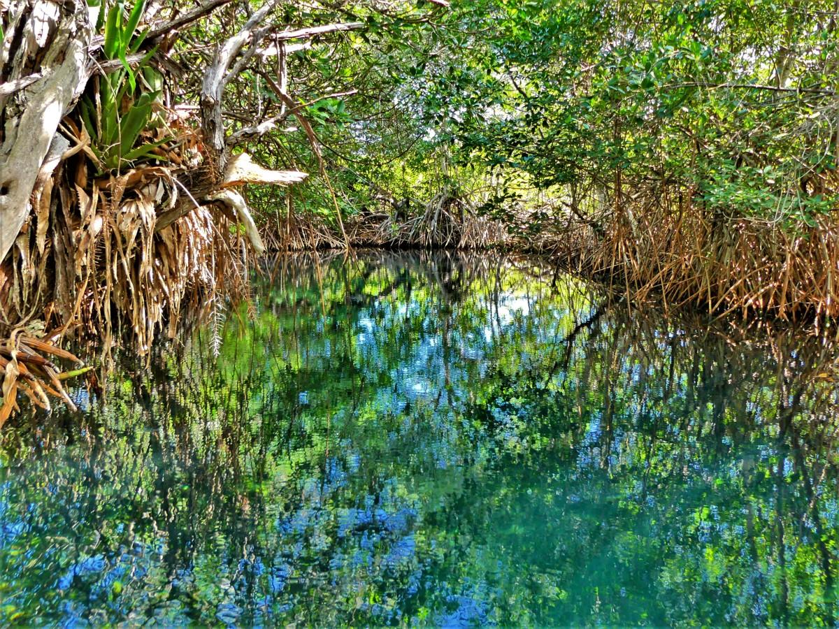 cenote tortuga.jpg
