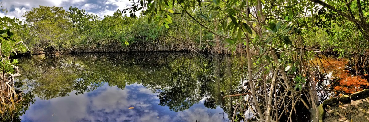 cenote viejo.jpg