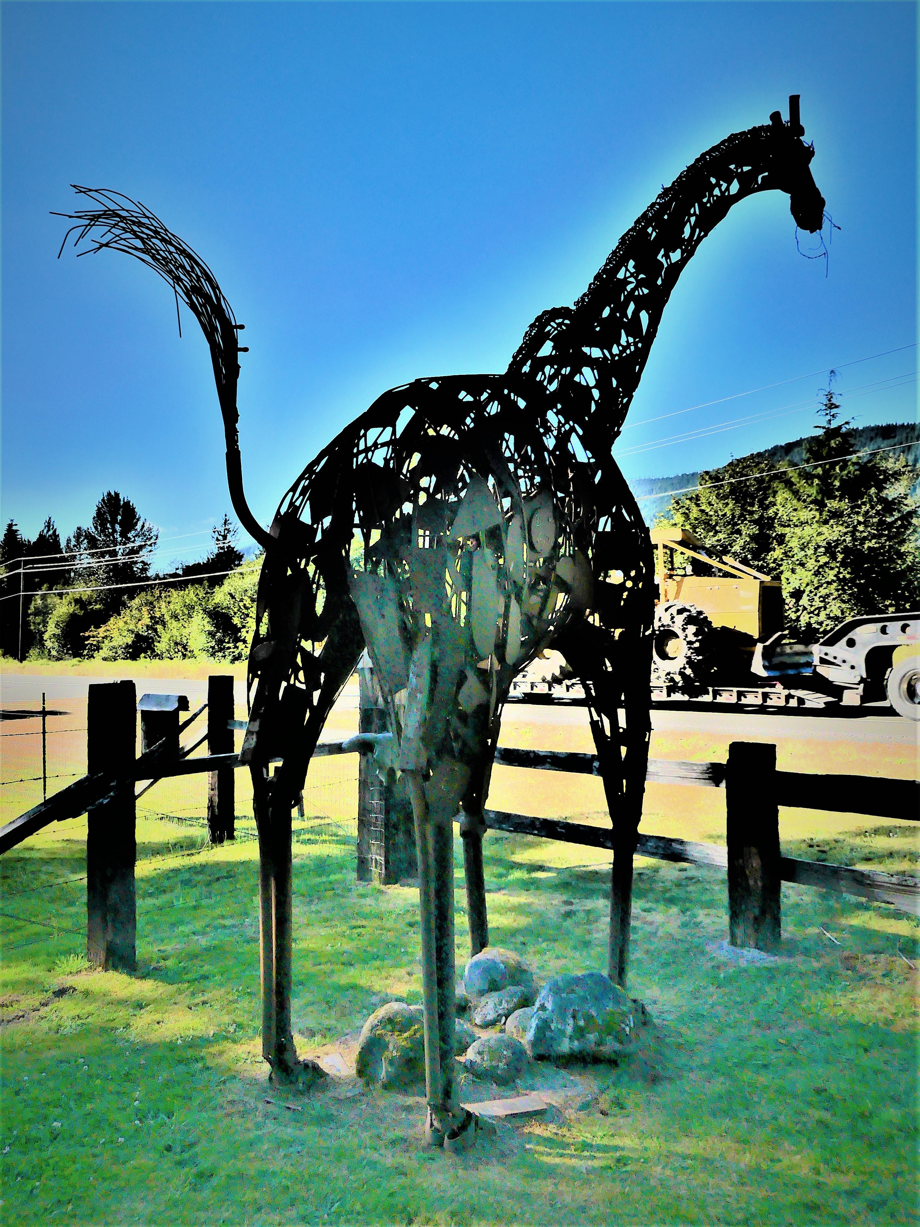 giraffe (3).jpg