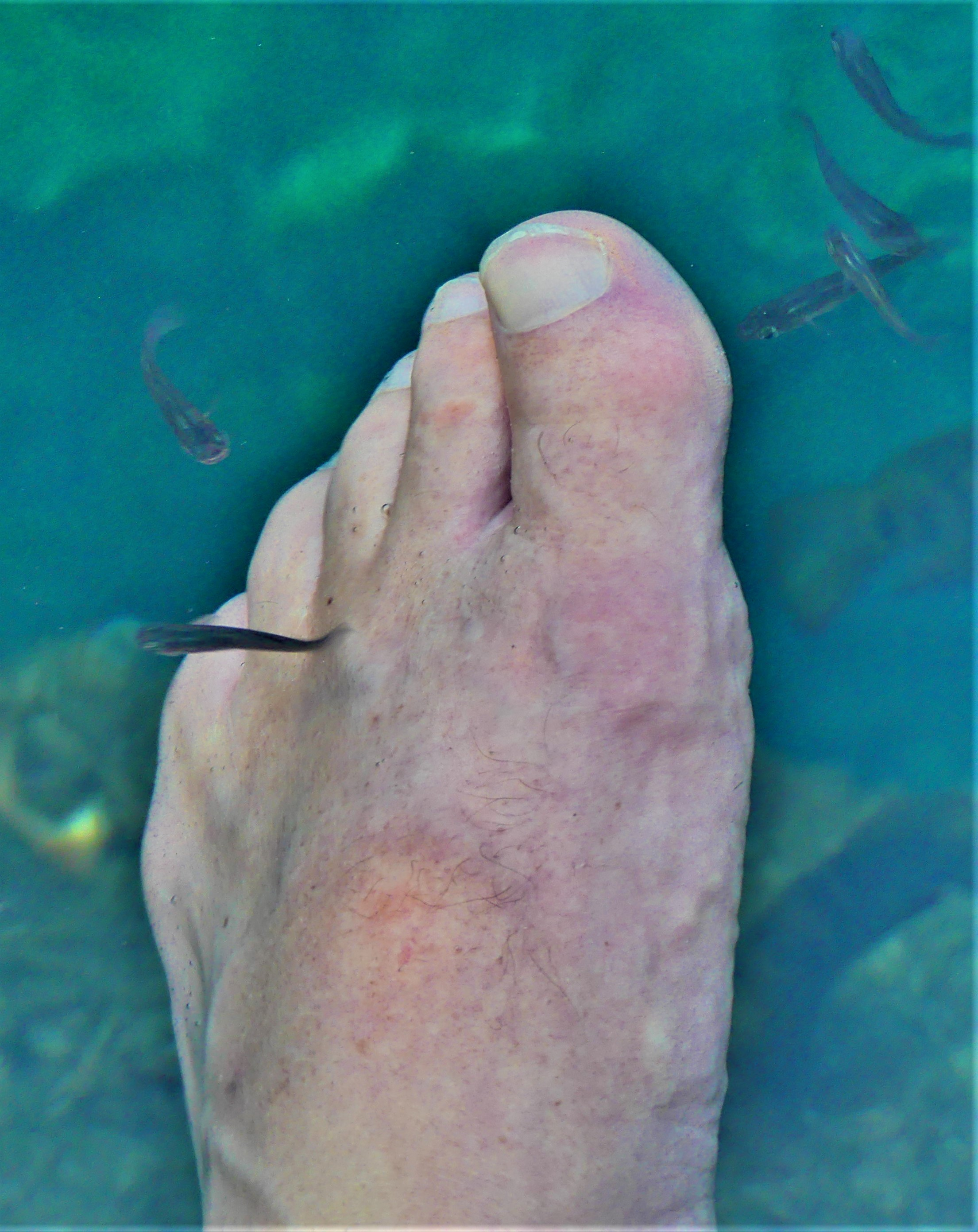 guppies and foot.jpg