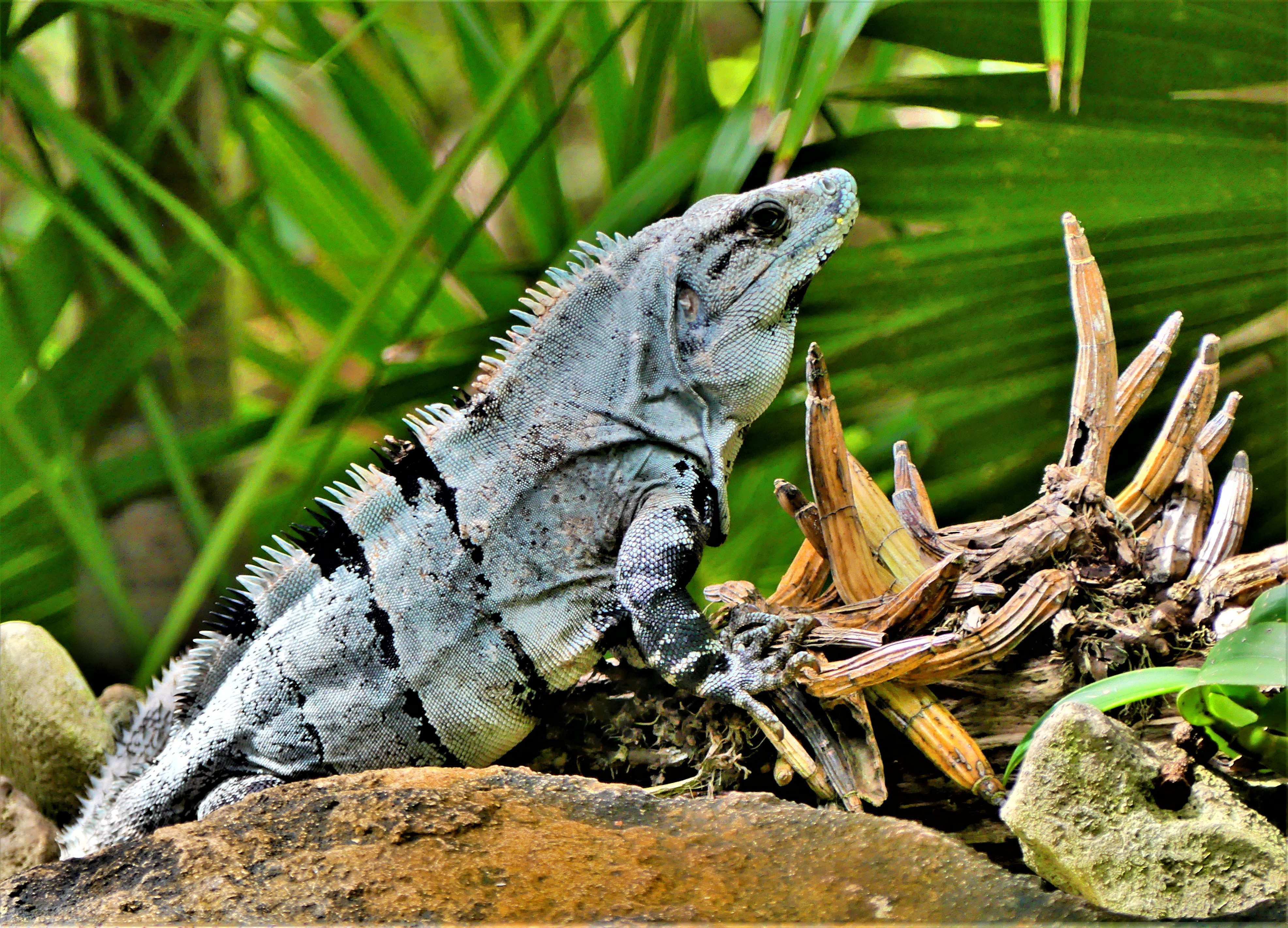 iguana and orchids.jpg