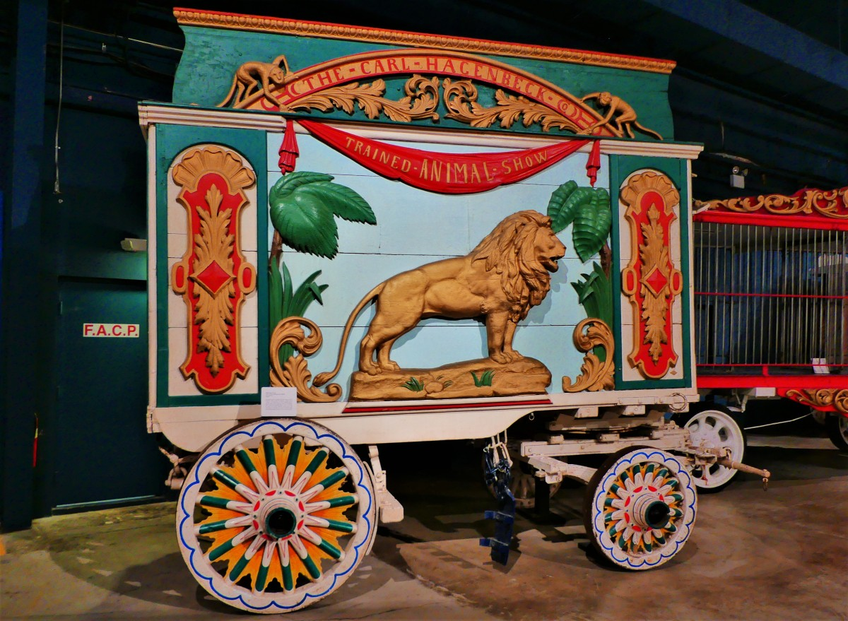 lion wagon