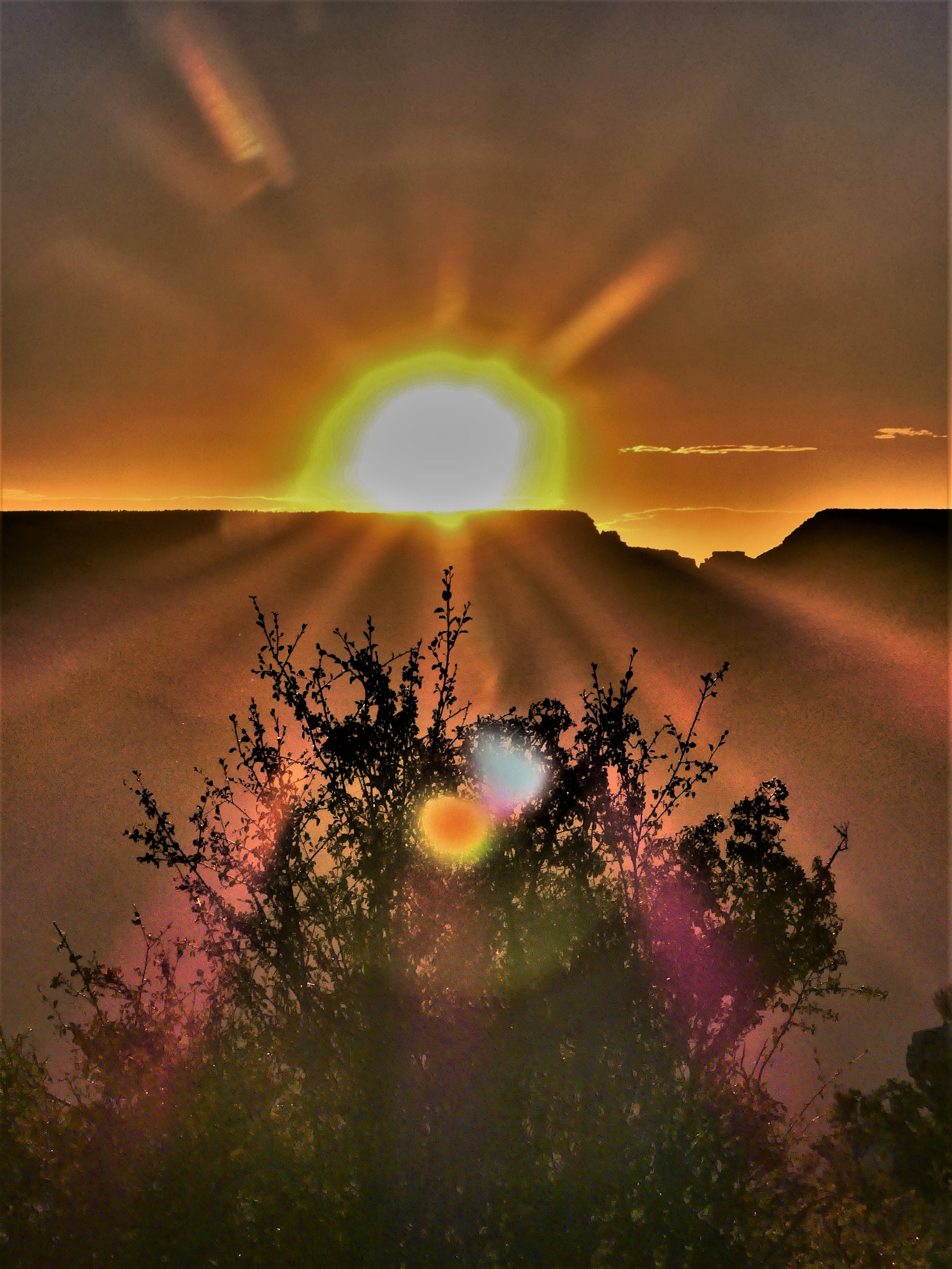 sun over tree (2)