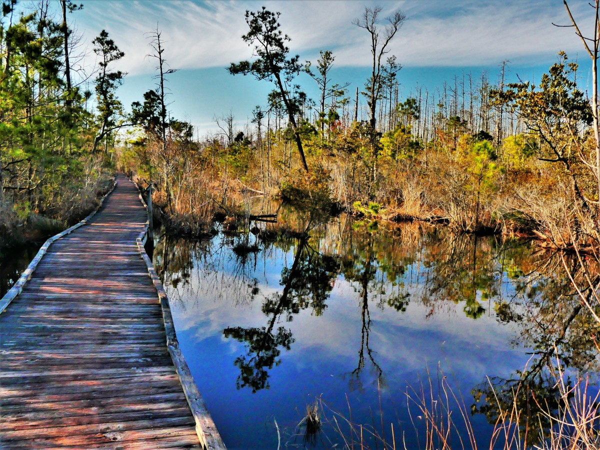 Alligator River National Wildlife Refuge trail