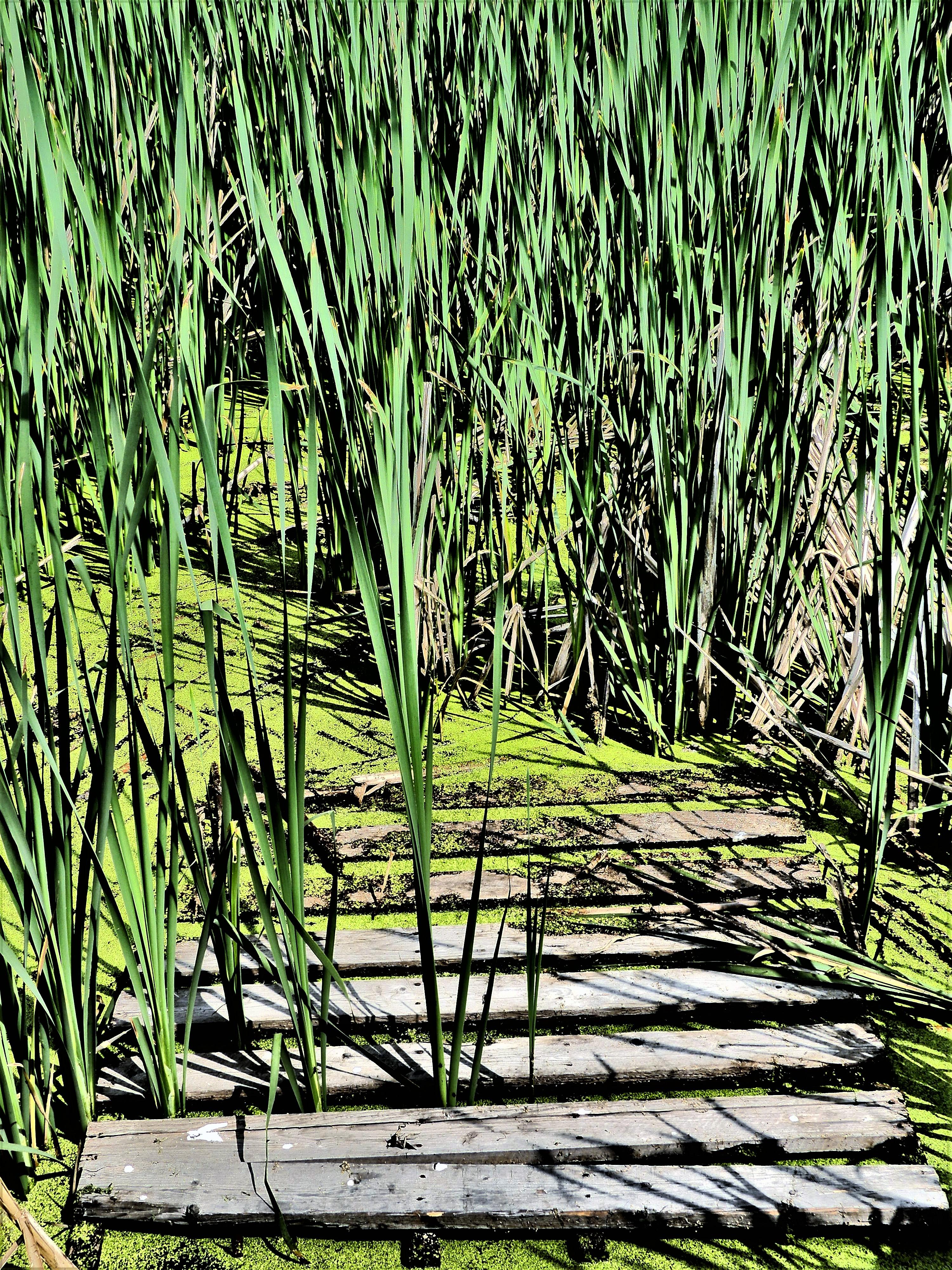 Buffalo Pound Nicolle Flats Nature trail