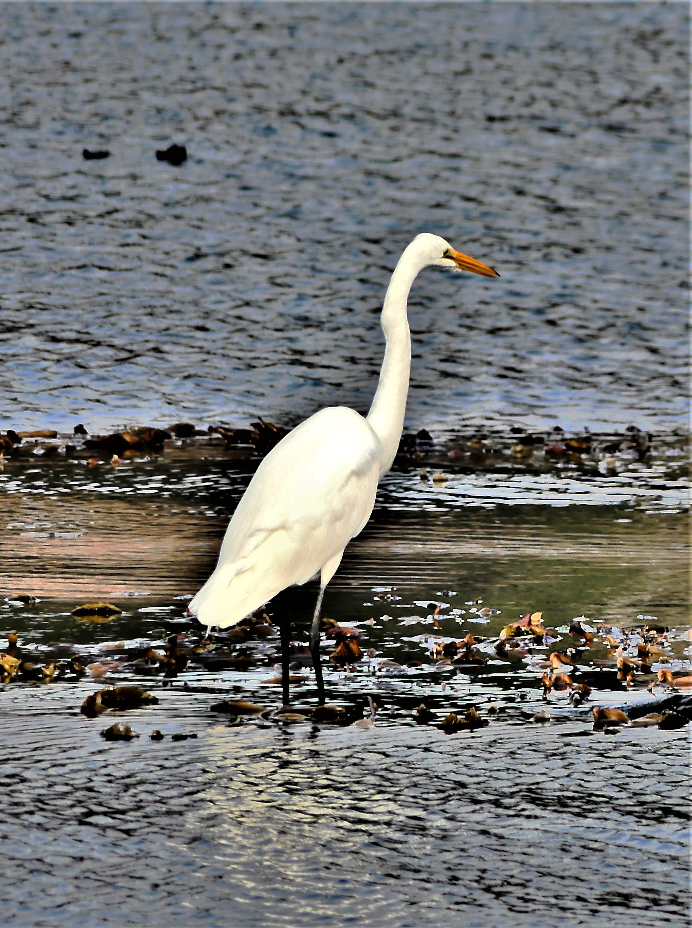 Carmel crane