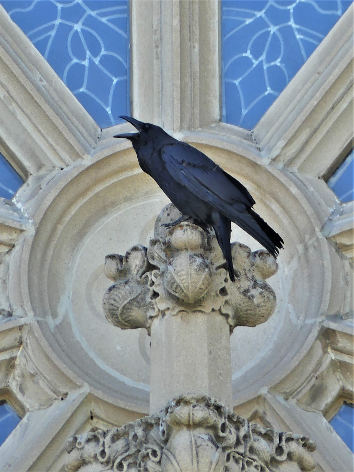 Helena Cathedral raven