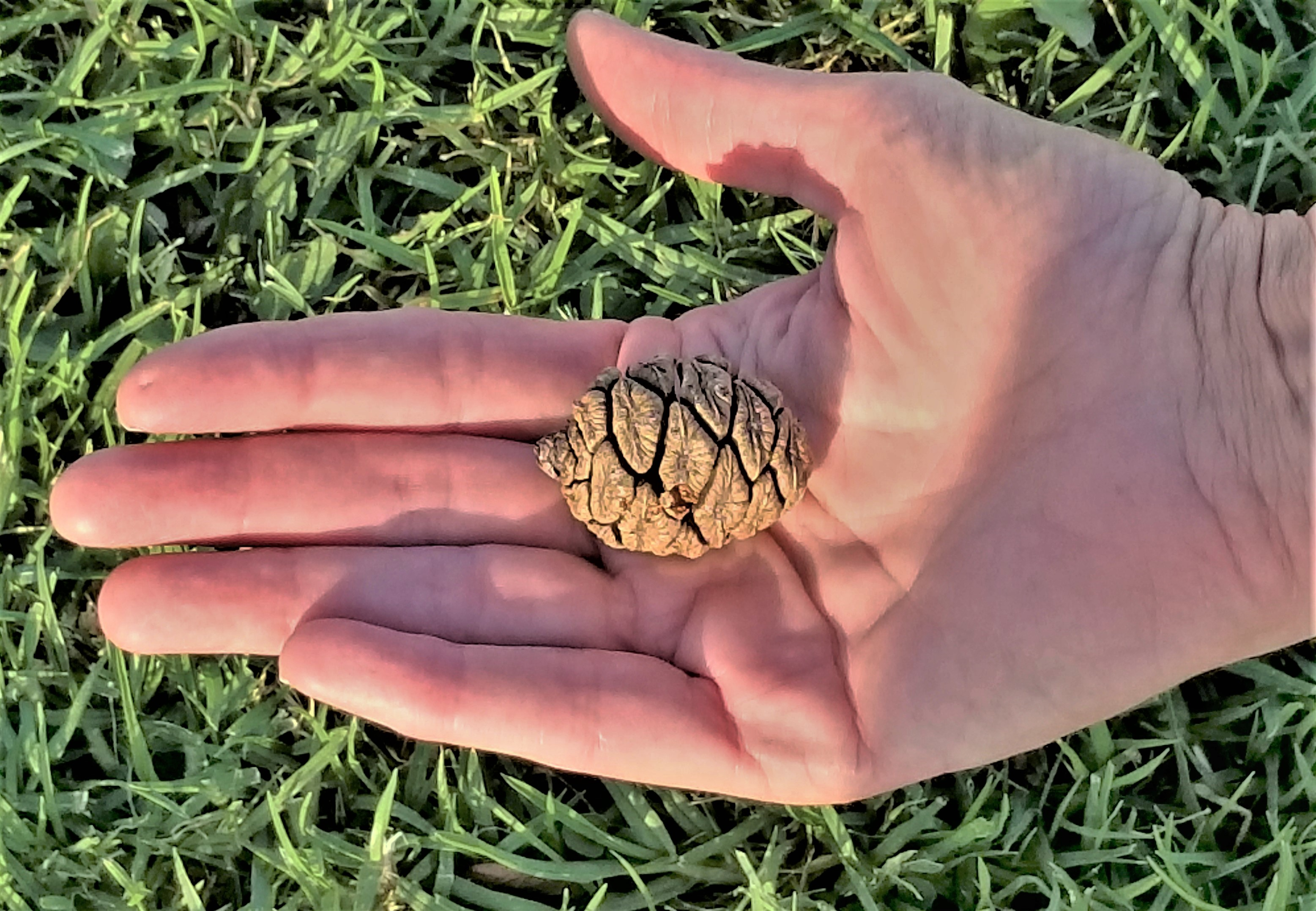 palm and seed.jpg