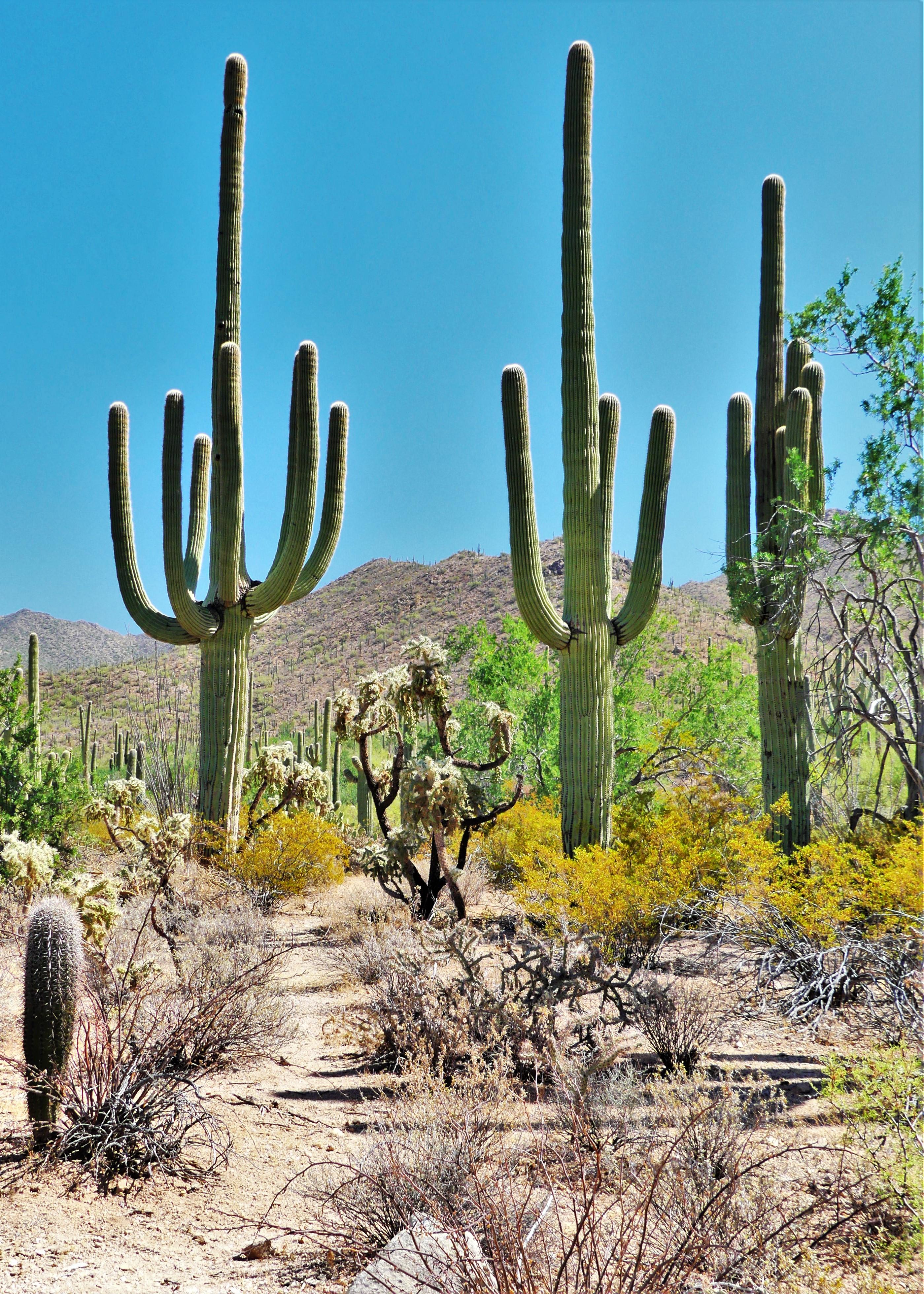 Saguaro Valley View Overlook trail