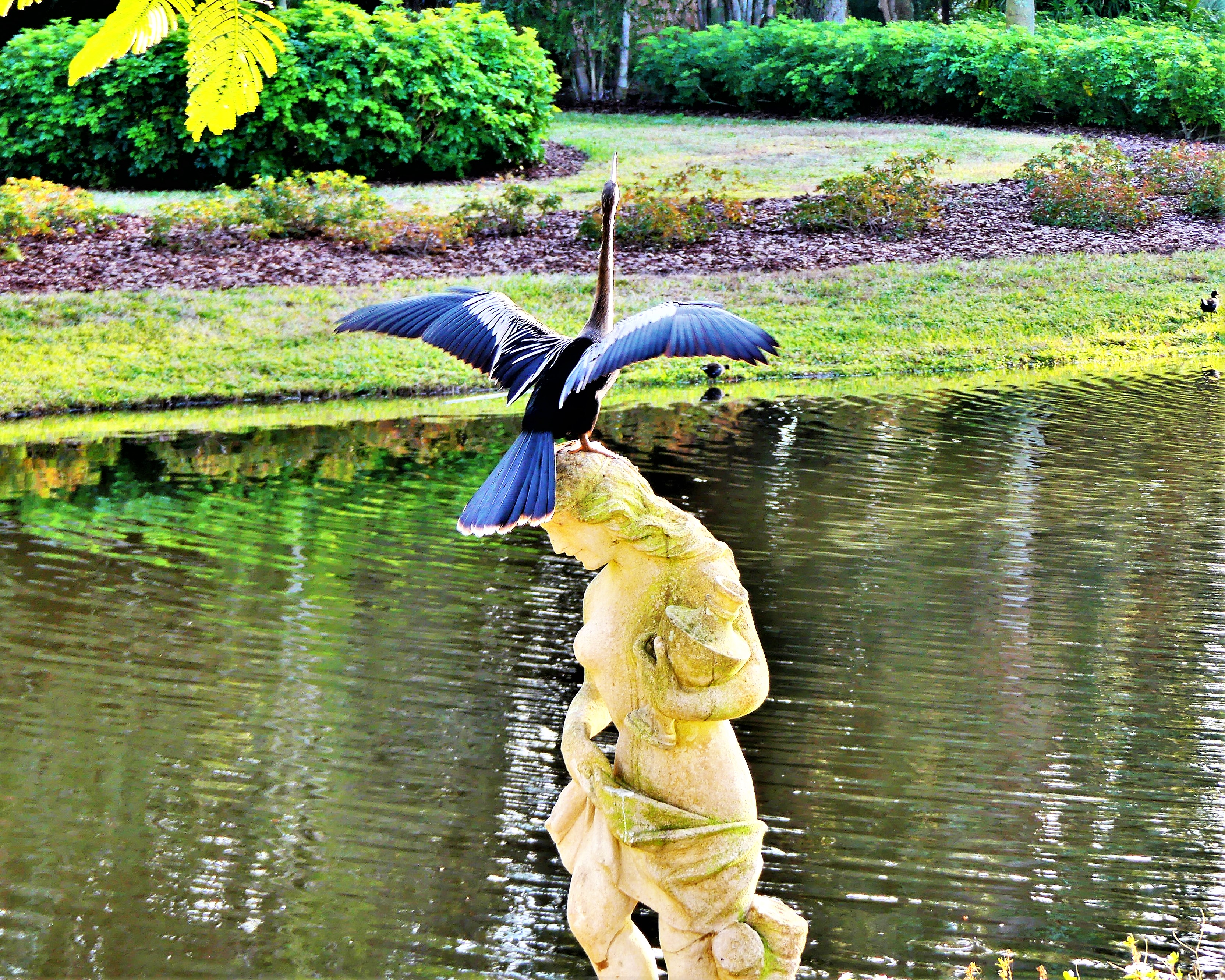 Sarasota crane1