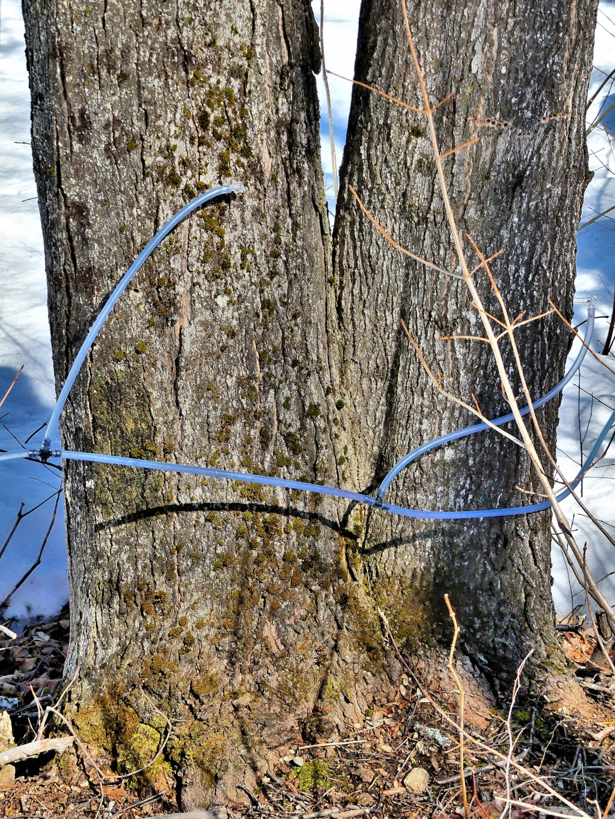 tree taps (2)
