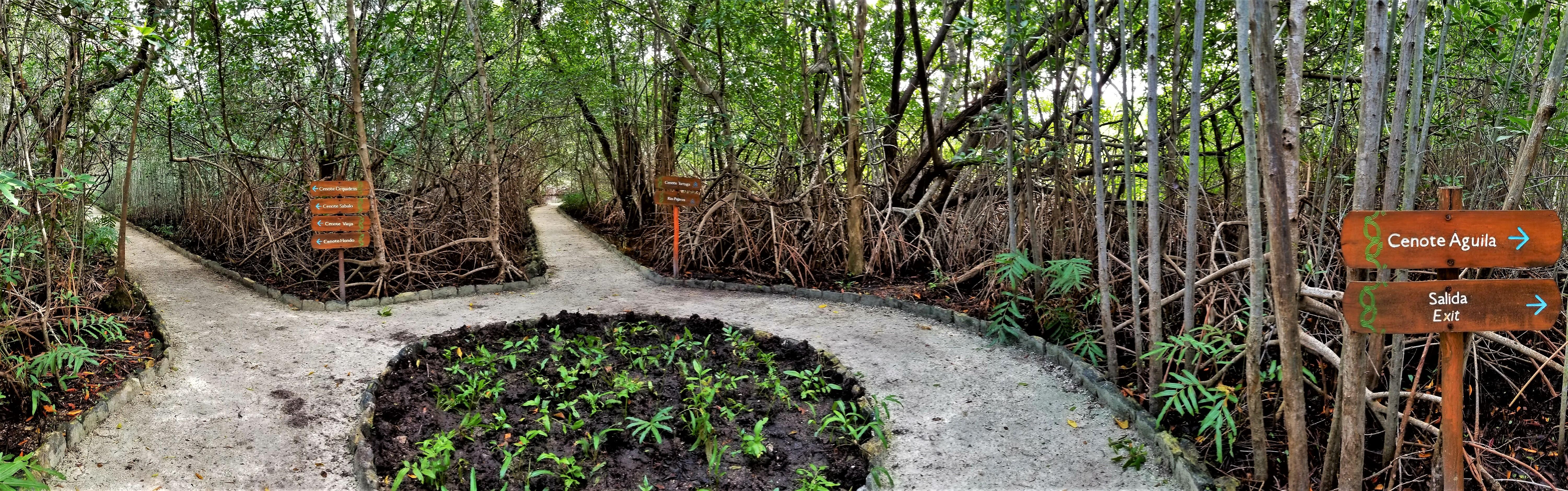 Tres Rios Cenotes Nature Trail