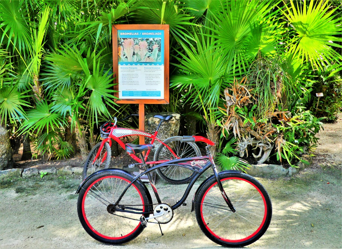 Tres Rios Cenotes trail