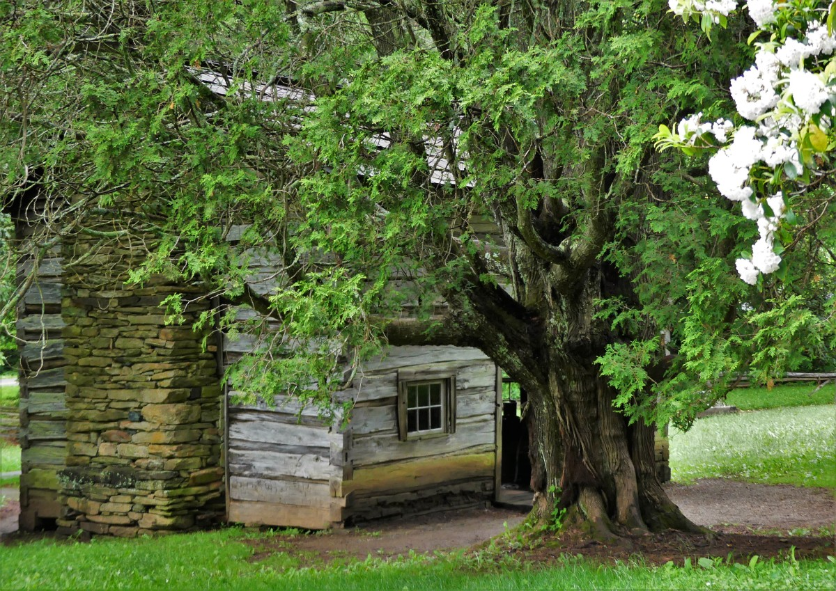 farmhouse with hemlock