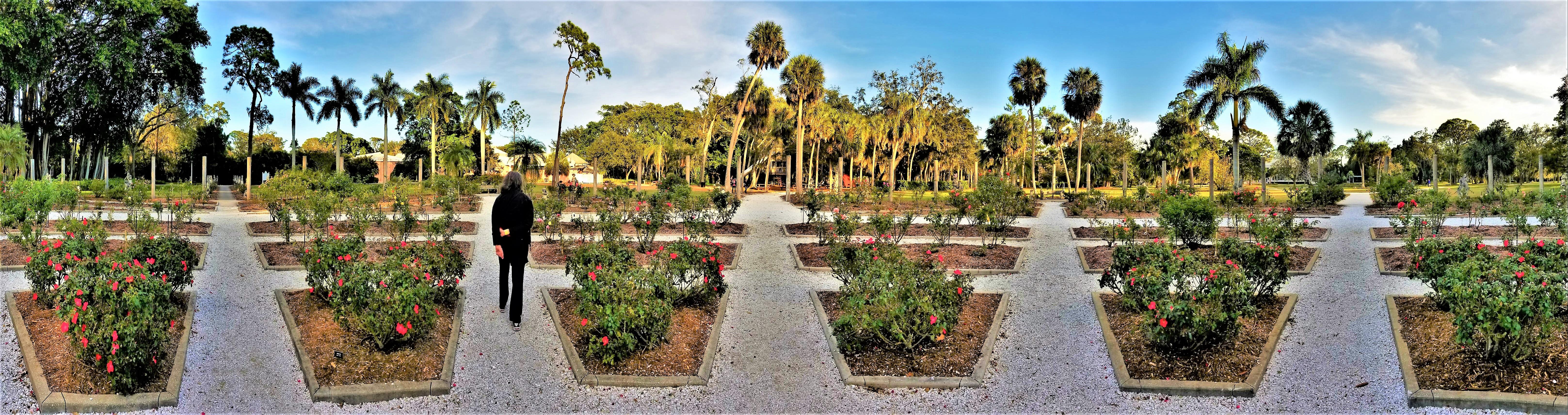 Mable's Rose Garden of Ca'd'zan, Sarasota