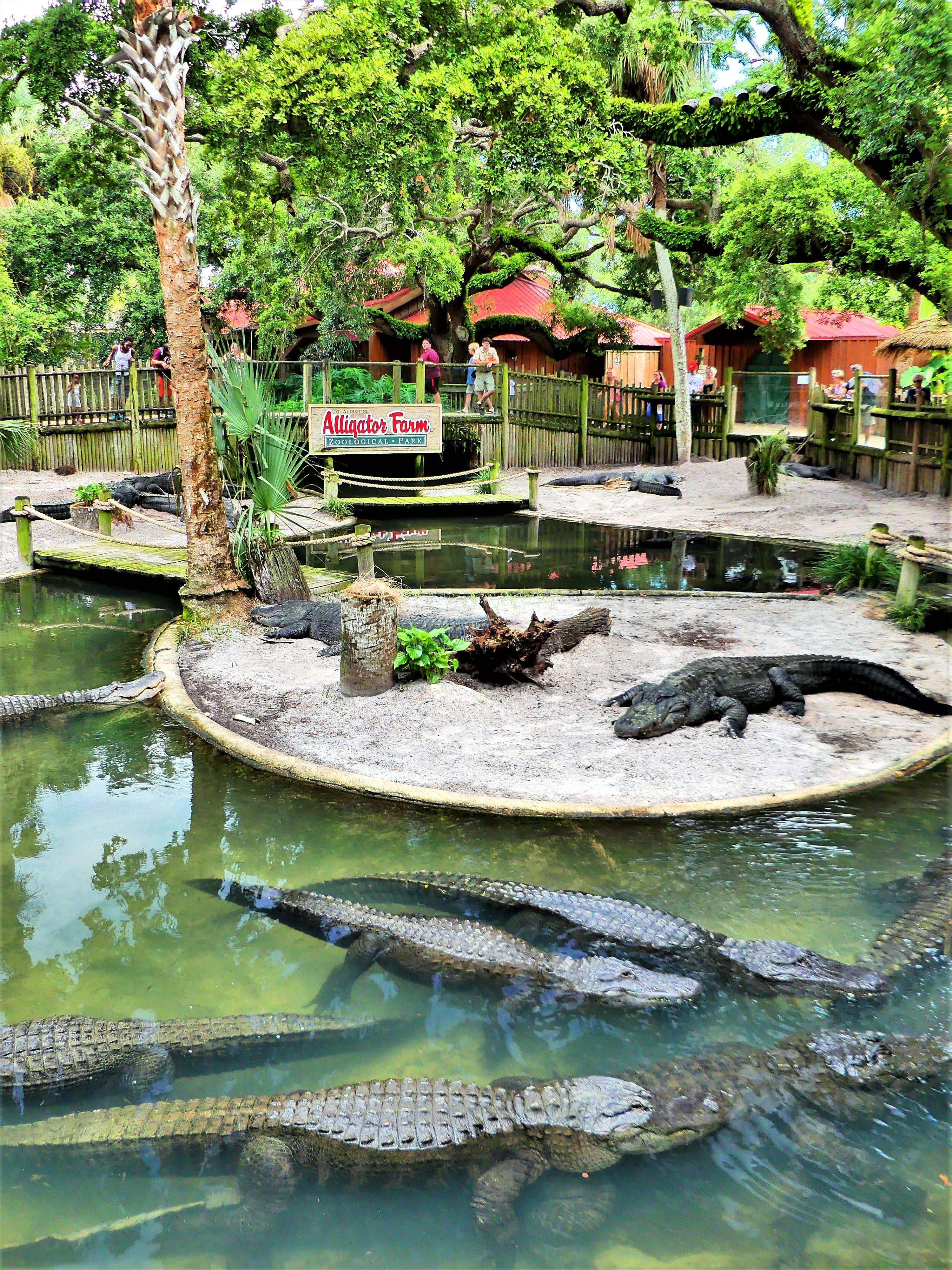 Alligator lagoon.jpg