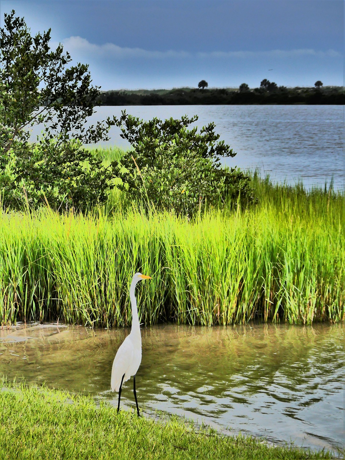 egret on the shore1.jpg