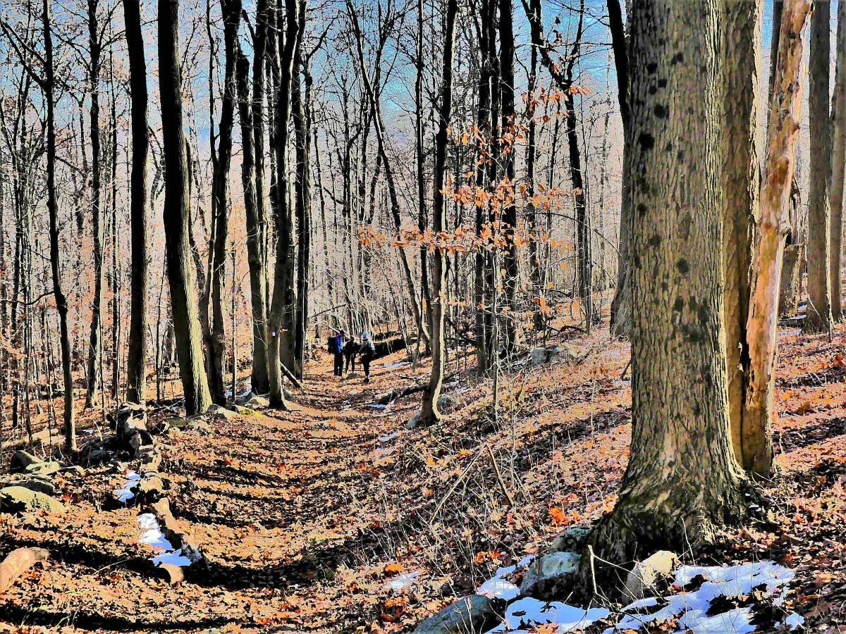 blue trail (2)