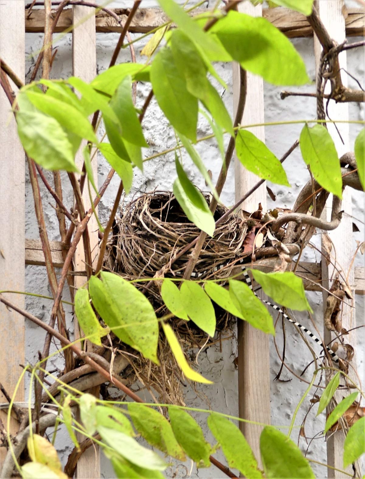 nesting vine