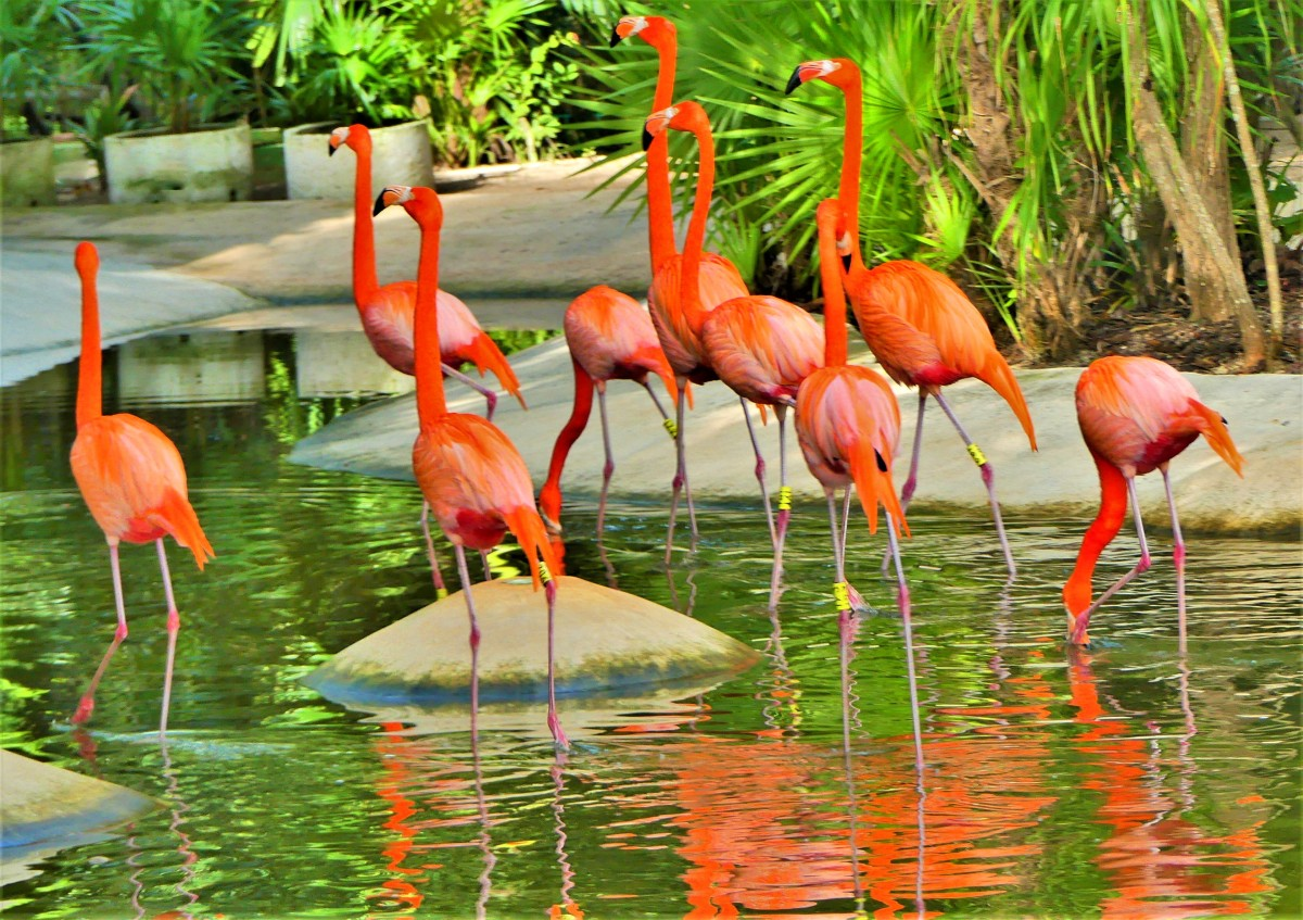 bevvy of birds