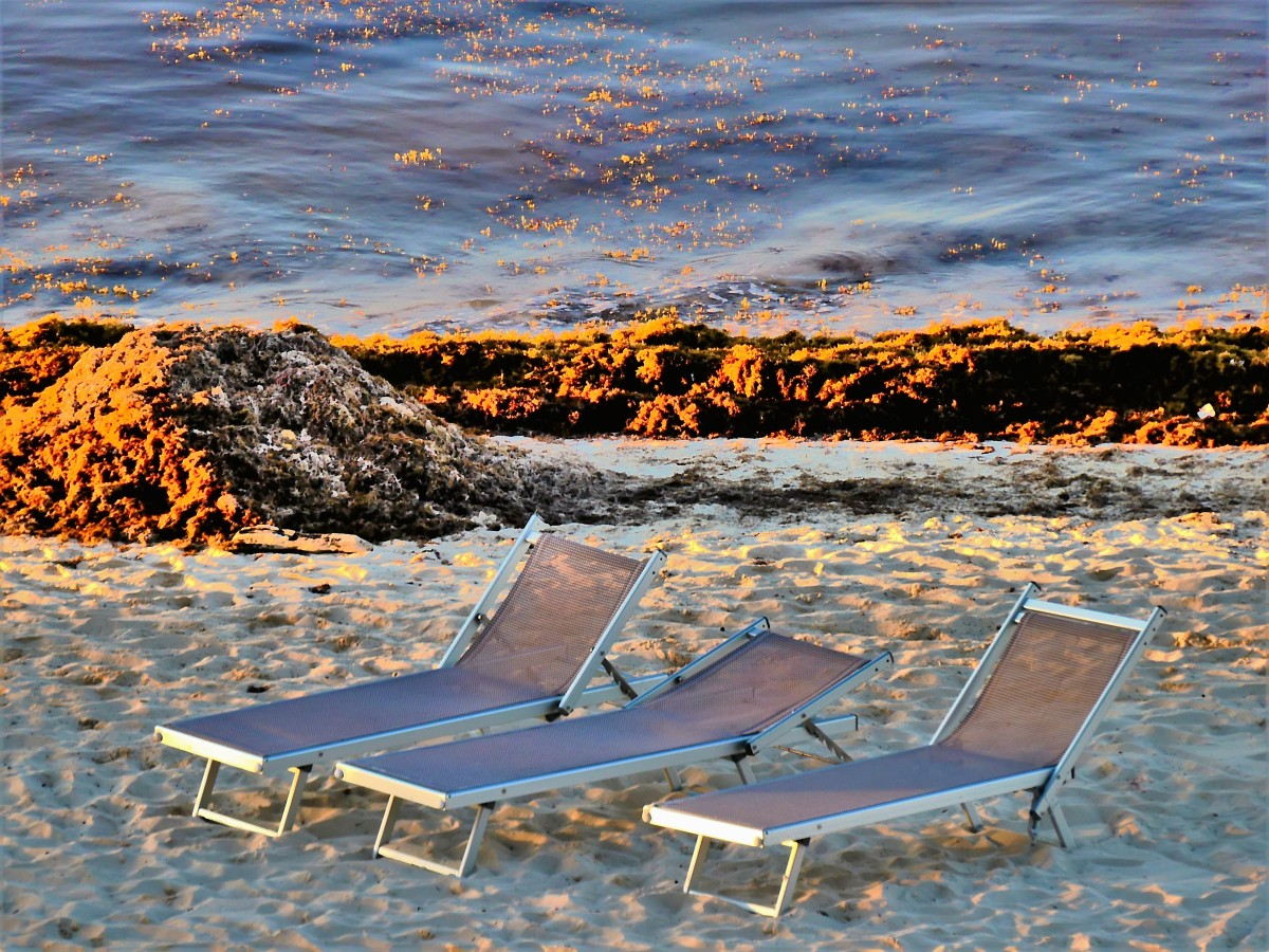 seaweed, sand and chaises at sunset