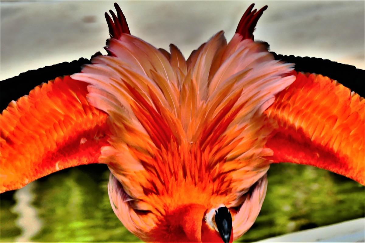 wings akimbo